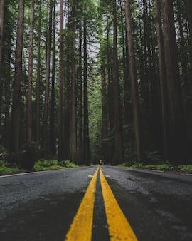 Foto vertical de uma estrada vazia no meio de uma floresta com altas árvores verdes