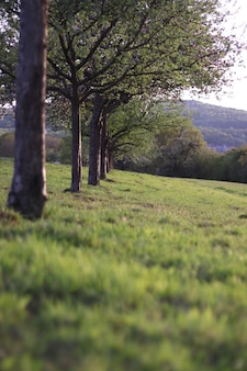 Foto vertical de uma fileira de árvores cercada de grama