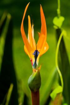 Foto vertical de uma flor chamada ave do paraíso