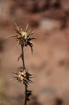 Foto vertical de uma flor de espinho em um deserto