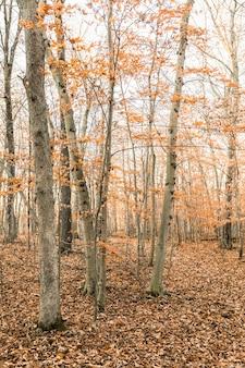 Foto vertical de uma floresta coberta de árvores e folhas secas no outono