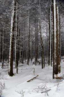 Foto vertical de uma floresta coberta de neve no inverno