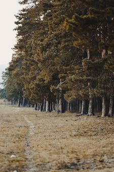 Foto vertical de uma floresta coberta por árvores altas e densas