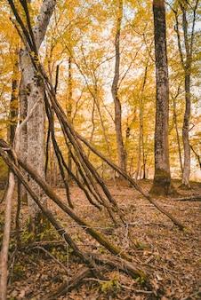 Foto vertical de uma floresta com árvores altas de folhas amarelas durante o dia