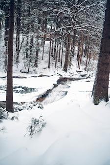 Foto vertical de uma floresta com árvores altas e cobertas de neve