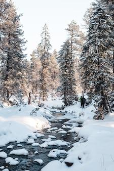 Foto vertical de uma floresta com árvores altas no inverno