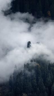 Foto vertical de uma floresta com árvores cobertas por nuvens, no outono