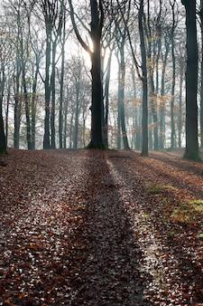 Foto vertical de uma floresta com árvores sem folhas e o sol brilhando entre os galhos
