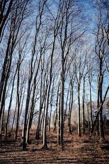 Foto vertical de uma floresta com muitas árvores sem folhas