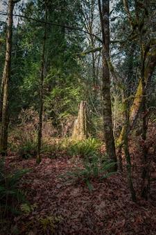 Foto vertical de uma floresta de outono com árvores altas e folhas coloridas