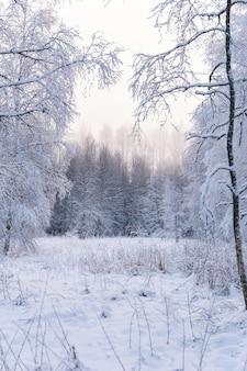 Foto vertical de uma floresta deslumbrante completamente coberta de neve