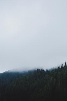 Foto vertical de uma floresta em um dia de nevoeiro