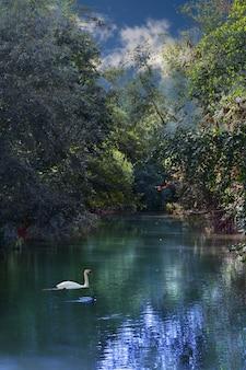 Foto vertical de uma floresta no rio com um cisne branco na água