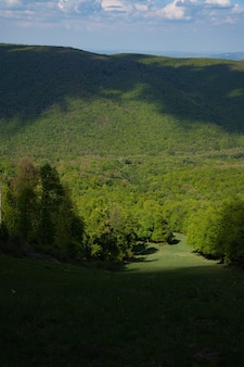 Foto vertical de uma floresta