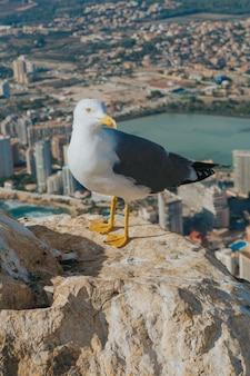 Foto vertical de uma gaivota em um penhasco com edifícios em calp, espanha