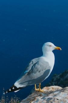Foto vertical de uma gaivota empoleirada em uma rocha cercada pelo mar em calp, espanha