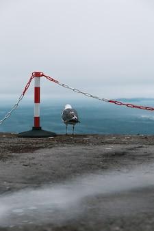 Foto vertical de uma gaivota na praia