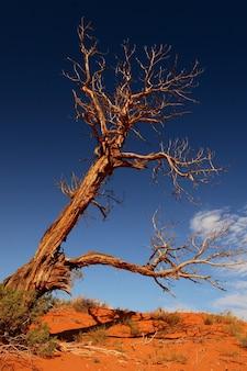 Foto vertical de uma grande árvore seca em um deserto em um fundo de céu azul