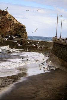 Foto vertical de uma ilha com gaivotas