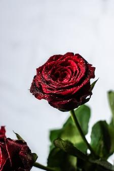 Foto vertical de uma linda rosa vermelha com algumas folhas em um fundo branco-acinzentado