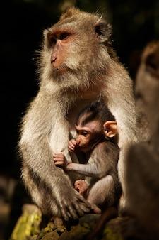 Foto vertical de uma mãe e de um macaco babuíno bebê descansando na rocha