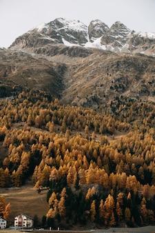 Foto vertical de uma montanha coberta de neve com densas florestas e folhagem de outono colorida