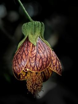 Foto vertical de uma orquídea murcha com fundo desfocado