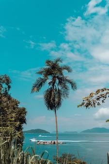 Foto vertical de uma palmeira alta na praia do rio