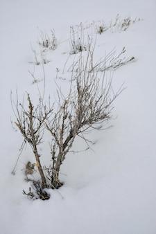 Foto vertical de uma planta sem folhas coberta de neve
