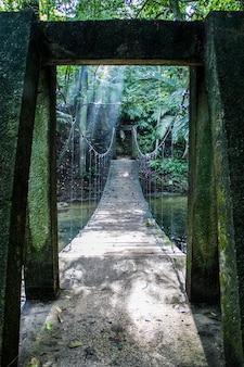 Foto vertical de uma ponte em uma selva tropical