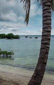 Foto vertical de uma praia com plantas emergindo do mar e palmeiras em porto rico
