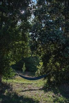 Foto vertical de uma rede azul presa a árvores no meio de uma floresta