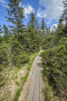 Foto vertical de uma trilha de madeira perto do lago ribnica nas colinas de pohorje, na eslovênia