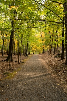 Foto vertical de uma trilha junto com árvores de outono na floresta