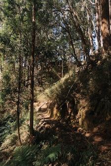 Foto vertical de uma trilha na floresta durante o dia