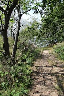 Foto vertical de uma trilha na ilha de bornholm, na dinamarca
