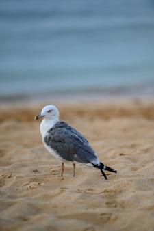 Foto vertical de uma única gaivota na areia da costa