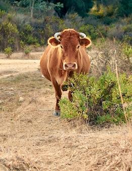 Foto vertical de uma vaca marrom no campo