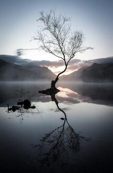Foto vertical do reflexo de uma árvore sem folhas no lago cercado por montanhas ao pôr do sol