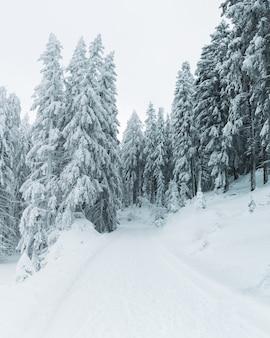 Foto vertical dos pinheiros cobertos de neve em uma colina completamente coberta de neve