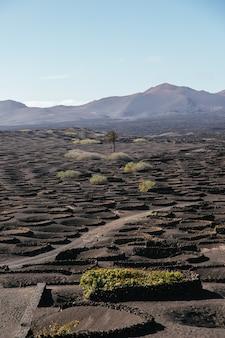 Foto vertical dos vinhedos na ilha de lanzarote durante o dia