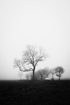 Foto vertical em escala de cinza de um campo misterioso coberto de névoa