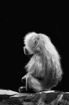 Foto vertical em tons de cinza de um babuíno em uma cena escura
