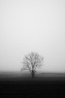 Foto vertical em tons de cinza de um campo misterioso coberto de névoa