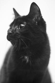 Foto vertical em tons de cinza de um gato preto com olhos fofos