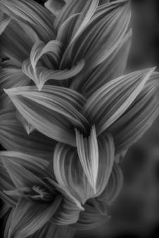 Foto vertical em tons de cinza de um lindo floral esfumaçado
