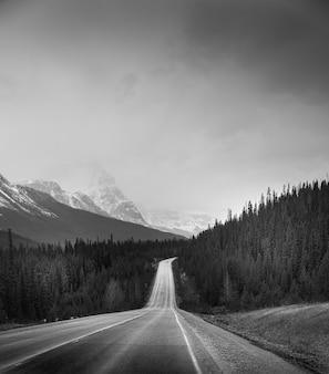 Foto vertical em tons de cinza de uma estrada no meio de uma floresta sob um céu claro