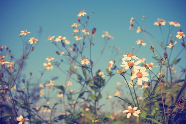 Foto vintage do fundo da natureza com flores e plantas selvagens