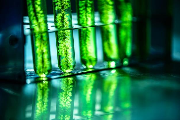 Fotobiorreactor em indústria de biocombustível combustível de algas laboratoriais.