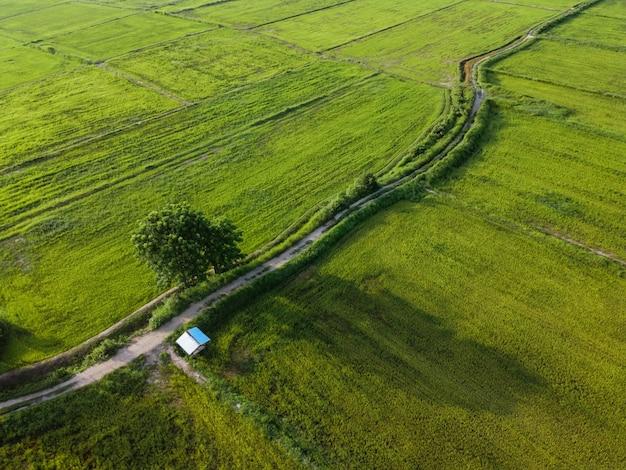 Fotografia aérea, campos de arroz verde em áreas rurais, tailândia